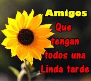 Linda Tarde